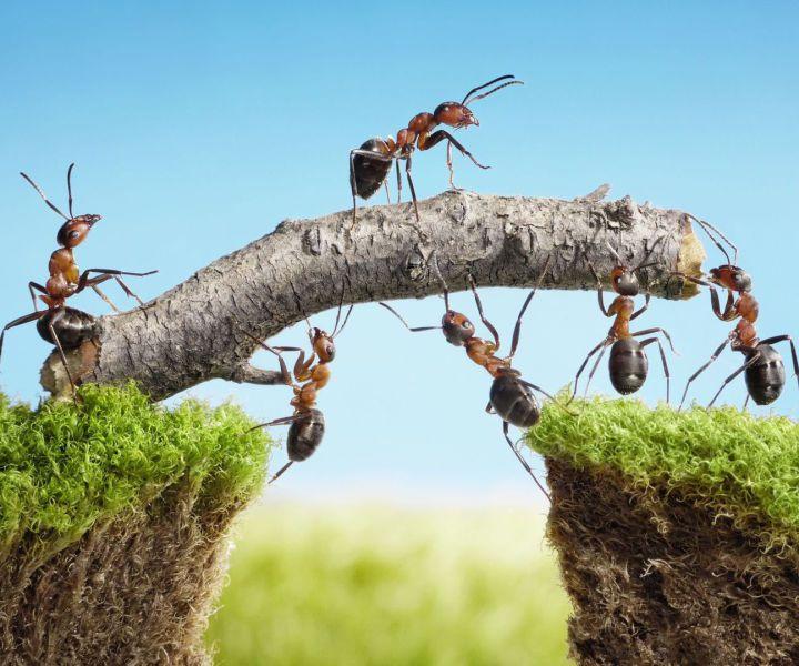 Teamtraining, Teamplayer, Zusammenarbeiten, belastung, Entlastung